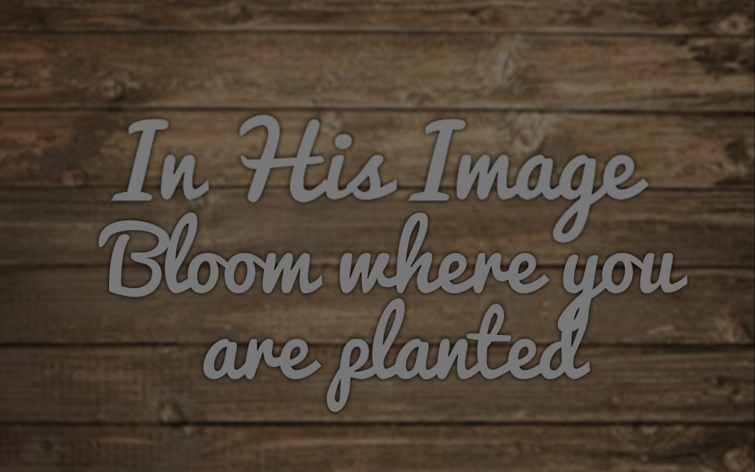 In His Image – Bloom Where You Are Planted